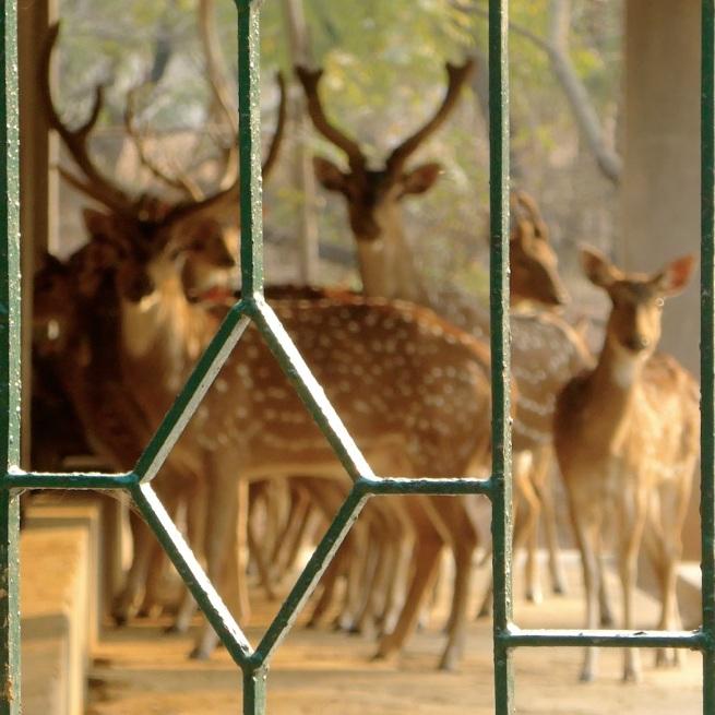 150208 Deer Park11